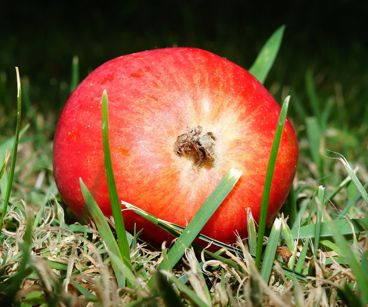 Apfel photo
